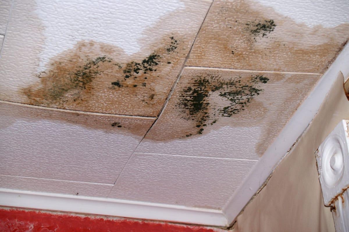 fuite plafond