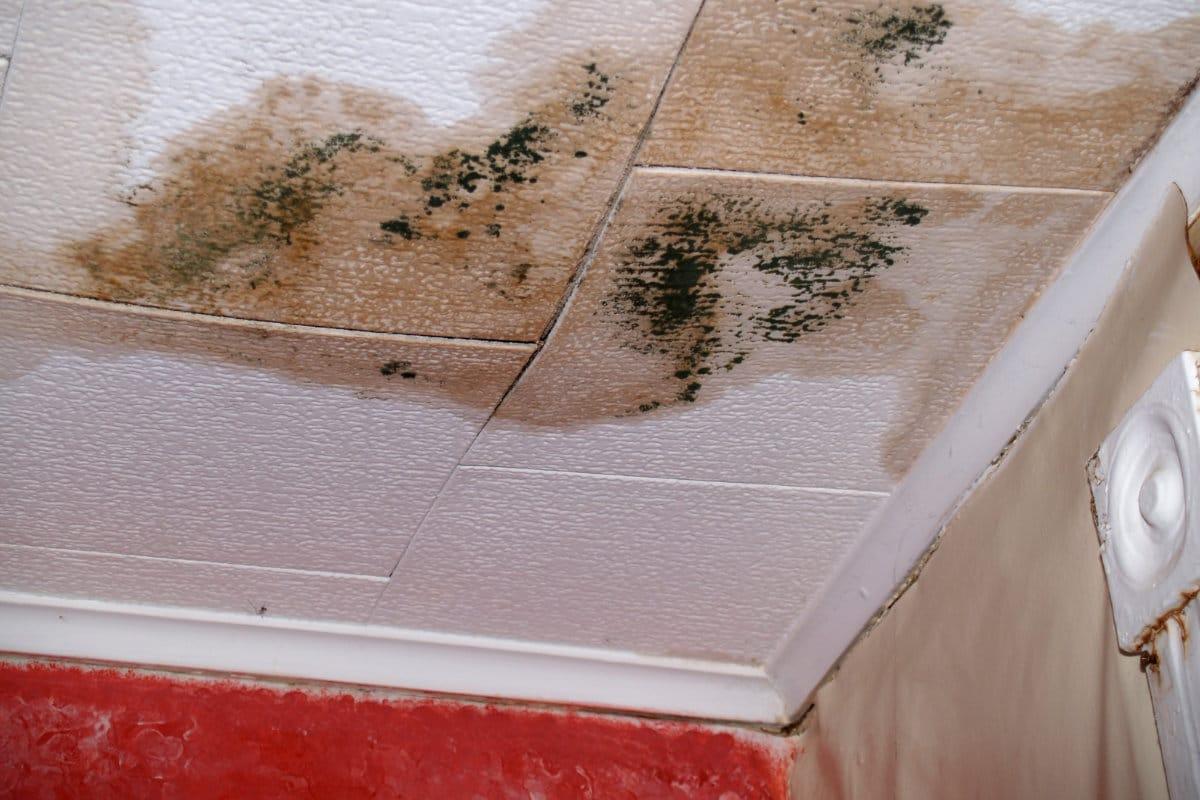effacer tache humidite plafond